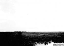 SzM703.jpg